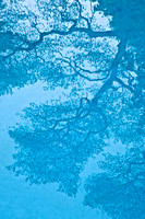 "Water Tree I, Archival inkjet print, white shadowbox frame/museum glass, 42"" x 64,"" $8,500"